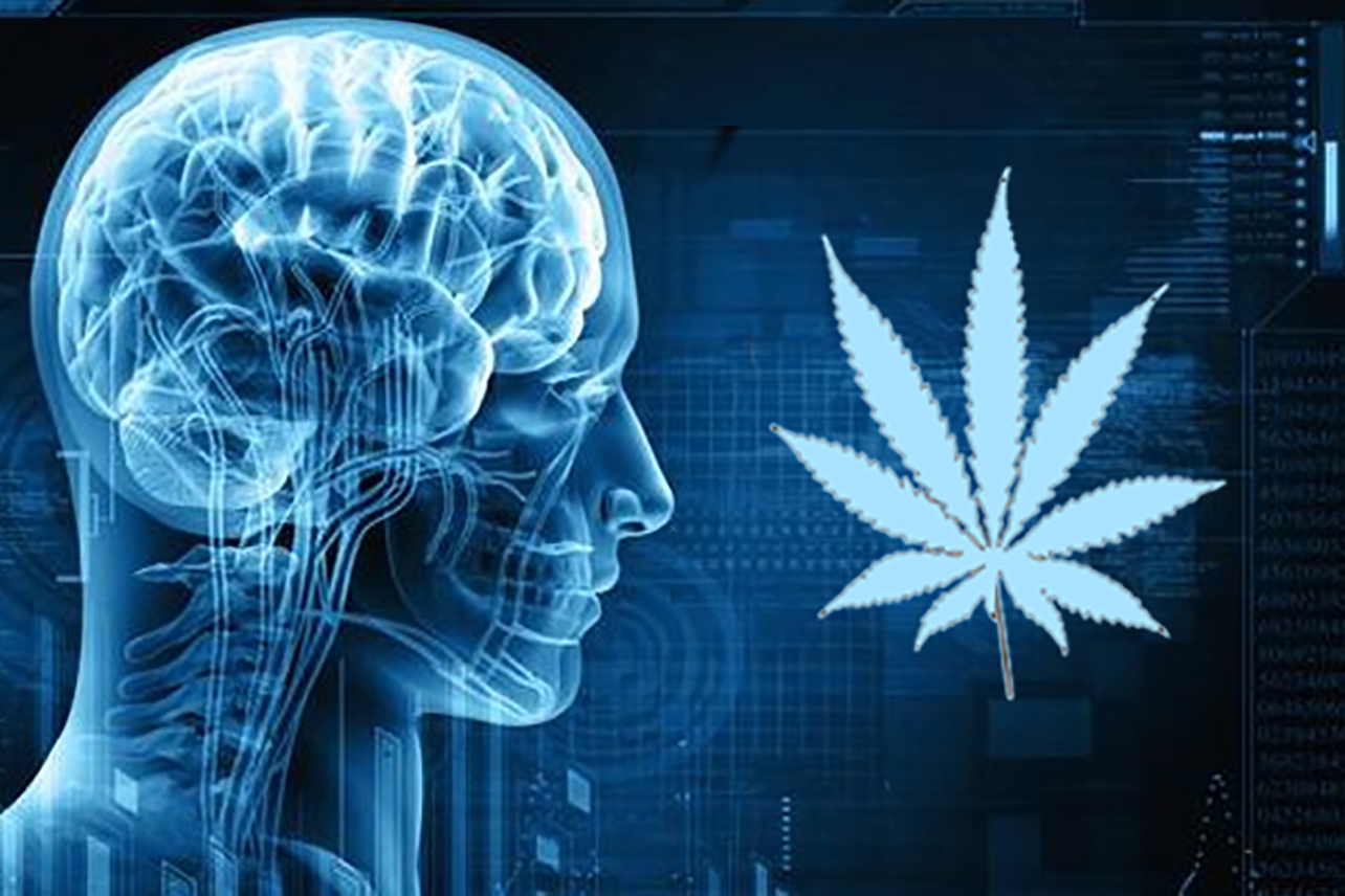 Does weed kill brain cells?
