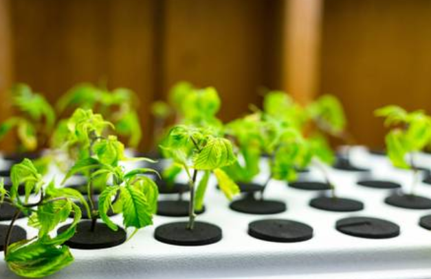 Hydroponics: A Quick Guide To Starting Homegrown Cannabis